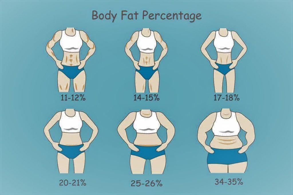 نسبة الدهون الطبيعية في جسم المرأة حسب الشكل والعمر